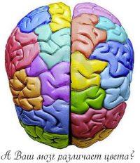 Тест на возраст мозга — различаете цвета?
