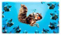 Покормите рыбок, черепашек и пингвинов